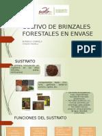 CULTIVO DE BRINZALES FORESTALES EN ENVASE.pptx
