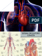Sistema Circulatorio 2016 Gra