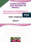 Diapositivas Post Cosecha Cebolla
