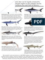 NOAA Shark Identification Placards