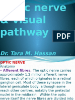 Visual Pathway and Optic n.