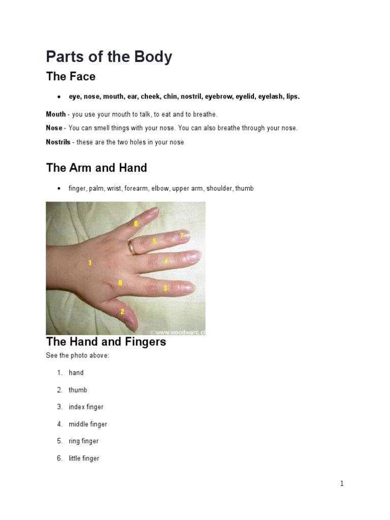 Body Parts Arm Finger