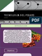 Diapositivas de Tecnologia de Pijuayo