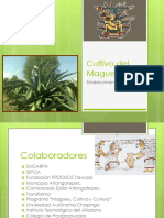 Anexo Maguey Pulquero (1)
