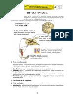 ANATOMIA CPU UNPRG SISTEMA SENSORIAL CAP-V.pdf