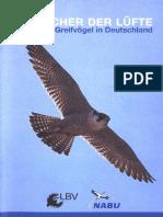 Greifvögel in Deutschland_NABU