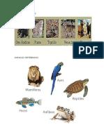 Animales Mamiferos, Vertebrados, Invertebrados, Oviparos