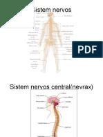 Curs Neuron Motor