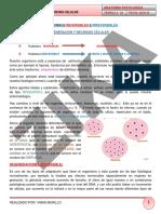 0.4.    DEGENERACION Y NECROSIS.    26-02-16-1.pdf