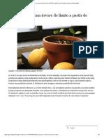 Como Crescer Uma Árvore de Limão a Partir de Sementes