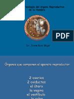 Fisioreproducrhembra.2015 (2)