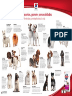 Perros Razas Pequeñas Poster