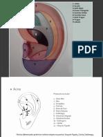 Combinao de Pontos Auriculares Na Esttica
