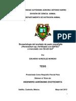 63409 GONZALEZ MORENO, EDUARDO  TESIS.pdf