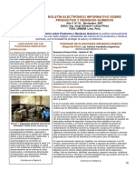 BOLETÍN N° 31 (Noviembre-2007).pdf