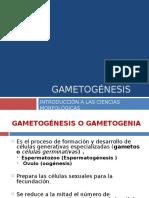 gametognesis4-120801194258-phpapp02.ppt