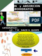 Clase 6. Digestion Carbohidratos