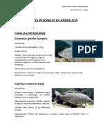 Tema 4 - Especies Pescables en Andalucía y Mas