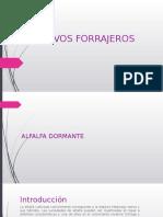 Alfalfa Dormante y Tnc en Alfalfa