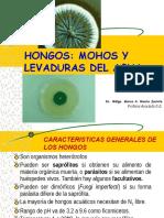 HONGOS Y LEVADURAS (6).pptx
