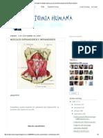 Anatomia Humana_ Músculos Suprahioideos e Infrahioideos