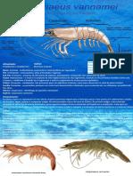 Alteraçoes finais - camarão