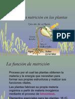 11_nutricion_plantas
