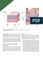 Glandulas_Anexas._Higado_y_Pancreas._Martini_et_al._2009._Anatomia_Humana.pdf