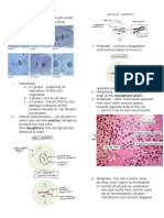 Mitosis and Embryogenesis reviewer