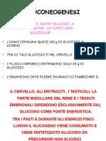 04 - gluconeogenesi