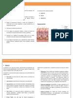 Estructura y Funcion de La Piel