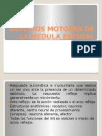 Reflejos Motores de La Medula Espinal
