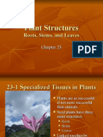 Ch 23 - Plant Structures report