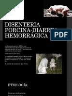 Disenteria Porcina Diarrea