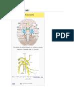 Nervio X XI.pdf