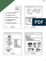 Tema 4 -Estructura interna y fisiología de la abeja.pdf
