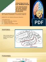 Lobulo Temporal, Sistema Limbico y Patologias