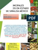 Principales Cultivos en Estado de Sinaloa México [Autoguardado]