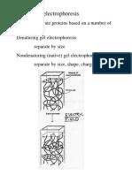 Chm 382 Protein Gel