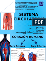 Diapositivas Sistema Circulatorio Final (2)