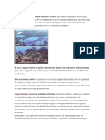 Informacion Arrecifes Coralinos