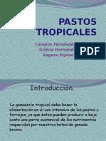 Pastos Tropicales