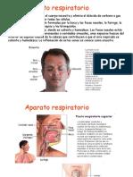 respiratorio-100106052418-phpapp01.ppt