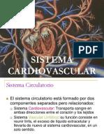 cardio histologia