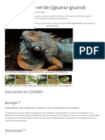 Iguana Iguana CONABIO I