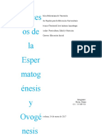 Proceos de l Esperaogenesis y Ovogenesis