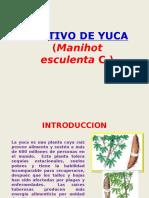 6. Cultivo de Yuca