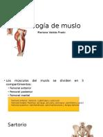 Miología de Muslo