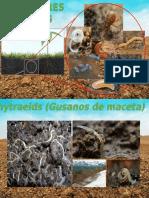 REGULADORES BIOLOGICOS CORREGIDO