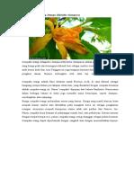10 Artikel Flora Dan Fauna